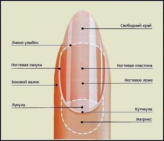 ot-kutikuly-raz-i-navsegda1
