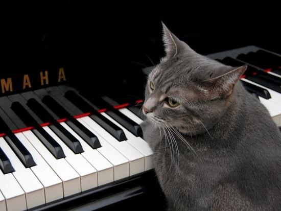 koshka-pianist2