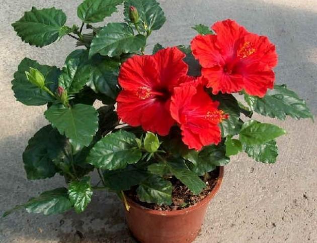 Алена Курилова раскрыла секрет, какие 10 цветков принесут счастье и деньги в ваш дом!